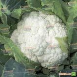 Шамборд F1 семена капусты цветной (Rijk Zwaan)