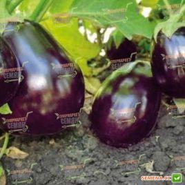 Шерил F1 семена баклажана (Rijk Zwaan)