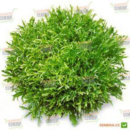 Сигал семена салата тип Эндивий зел. дражированные (Rijk Zwaan)