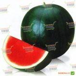 Титания F1 семена арбуза тип Шуга Беби (Rijk Zwaan)