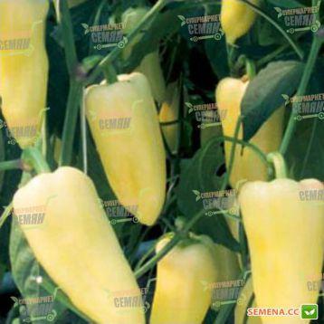 Центури F1 семена перца сладкого (Rijk Zwaan)