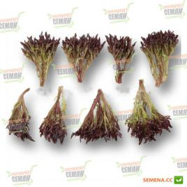 Винтекс семена салата тип Саланова красн. дражированные (Rijk Zwaan)