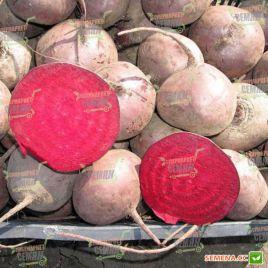 Зепо F1 (Зеппо F1) семена свеклы столовой ультраранней окр. (Rijk Zwaan)