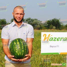 Варда F1 семена арбуза тип Кримсон Свит раннего 70 дней 10-13 кг (Hazera)