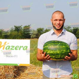 Васко F1 семена арбуза тип Кримсон Свит раннего 62-65 дней 8-12 кг (Hazera)