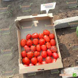 Галилея F1 семена томата дет. (Hazera)