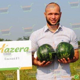 Экстази F1 семена арбуза бессемянного (Hazera)
