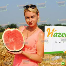 Лахат F1 семена арбуза тип Шуга Бейби ранний 65-70 дней 10-12 кг овал. (Hazera)