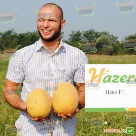 Нево F1 семена дыни тип Ананас ультраранней 63-65 дн. 2-3 кг овал. оран./бел. (Hazera)