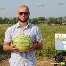 Ортал F1 семена арбуза бессемянного среднераннего 70-75 дней 5-7 кг окр. (Hazera)