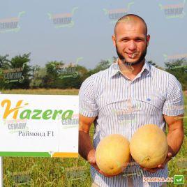 Раймонд F1 семена дыни тип Ананас средней 70-75 дн. 3-5 кг овал. оран./крем. (Hazera)