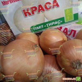 Краса семена лука репчатого среднего 123-128дн 130-140г (Moravoseed)