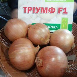 Триумф F1 семена лука репчатого среднераннего 120-123 дн 170-180г (Moravoseed)