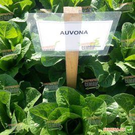 Авона (Айвона) семена салата тип Ромэн зел. дражированные (Rijk Zwaan)