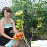 Уманья 73-602 семена томата (GL Seeds)