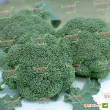 Баро Стар F1 семена капусты брокколи (NongWoo Bio)