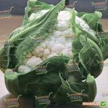 Бьянко F1 семена капусты цветной среднеранней (NongWooBio)