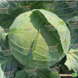 Билбо F1 семена капусты б/к ранней 43-45 дн. 1-1,5 кг (NongWoo Bio)