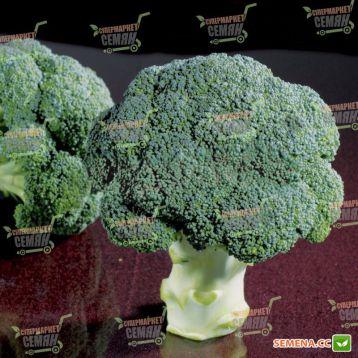 Чуби F1 семена капусты брокколи средней 75-80 дн. 0,8-1,2кг (NongWoo Bio)
