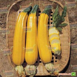 Елоу Хаус F1 семена цуккини раннего 45-50дн. ярко-желтого (NongWoo Bio)