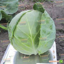 Фора F1 семена капусты б/к ранней (NongWoo Bio)