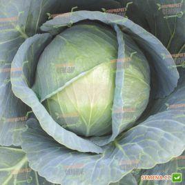 Галакси F1 семена капусты б/к средне-поздней 95-110 дн. 4-6 кг (NongWoo Bio)