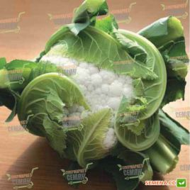 Илькар F1 семена капусты цветной ранней 65-70 дн. 0,7-1 кг бел. (NongWoo Bio)