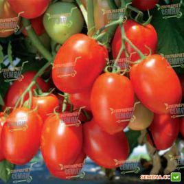 Кармен F1 семена томата дет. слив. 105-110 гр. (NongWoo Bio)