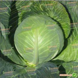 Одиссей F1 семена капусты б/к среднеспелой (NongWoo Bio)