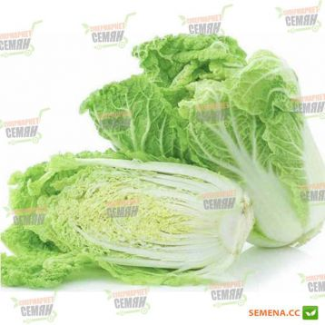 Саммер Хайленд F1 семена капусты пекинской поздней 70-75 дн. до 1,5 кг (NongWoo Bio)