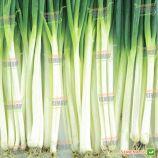 Вінтер Сілвер насіння цибулі на перо (NongWoo Bio)