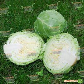 Голден Бол F1 семена капусты б/к ультраранней (NongWoo Bio)