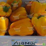 Люмос F1 семена перца сладкого тип Блочный раннего 60-63 дн. корот.куб. 220-250 гр. 9х10 см зел./желт. (Syngenta)