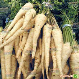 Арат семена петрушки корневой поздней 150 дн (Bejo)