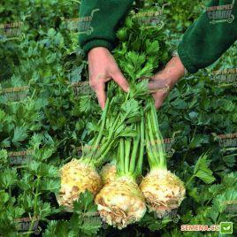 Балена семена сельдерея корневого (Bejo)