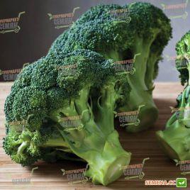 Белстар F1 семена капусты брокколи средней 73дн 2,5кг (Bejo)