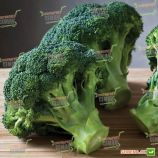 Белстар F1 семена капусты брокколи средней 73 дн. 0,9-1,2 кг (Bejo)