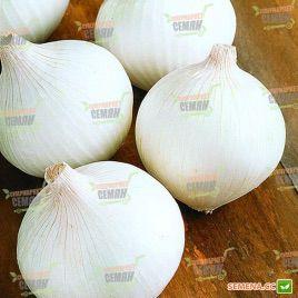 Вайт Винг F1 (PR) семена лука репчатого раннего 90-95дн. белого (Bejo)