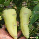 Аккорд F1 семена перца сладкого тип Венгерский раннего 65-70 дн. конич. 10х6см 3-х камер. 5-7мм молоч./красн. (Hazera)