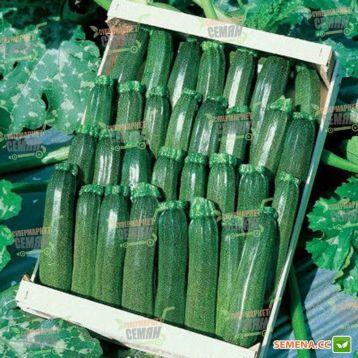 Аниса F1 семена цуккини (Hazera)