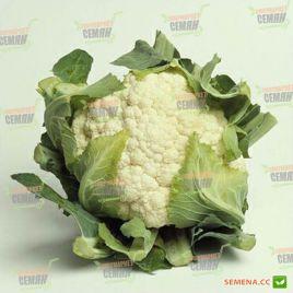 Барселона F1 семена капусты цветной средней 75-80 дн. 1,5-2,5 кг бел. (Hazera)