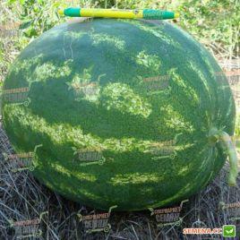 Кримсон Свит семена арбуза среднего 78-85 дн. 8-10 кг (Hazera) СНЯТО С ПРОИЗВОДСТВА