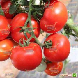 Магнетик F1 семена томата индет. среднего 80-85 дн. окр. до 200гр (Hazera)