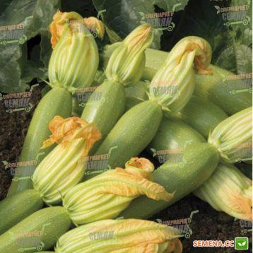Невира F1 семена кабачка (Hazera)