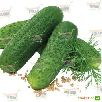 семена огурца парсифал f1