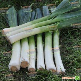 Порбелла семена лука порей среднепозднего 90-95дн. (Hazera)