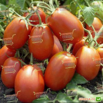 Рио Гранде семена томата дет. (Hazera)