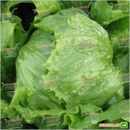 Робинсон семена салата тип Айсберг зел. (Hazera)