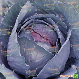 Родон F1 (калибр.) семена капусты к/к поздней 130 дн. 2-3 кг окр. (Hazera)