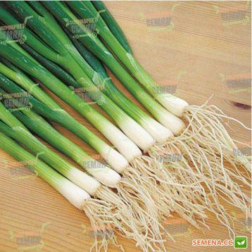 Савел семена лука на перо раннего 65-75дн. (Hazera)